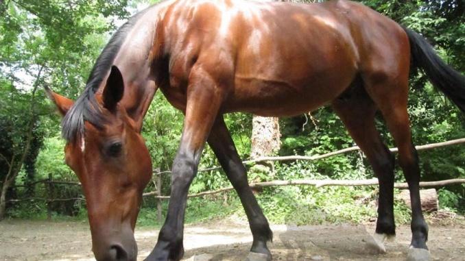 Lipanj 2017.g. - SPAŠAVAMO konja DINU iz Hipodroma Oroslavje