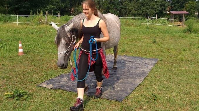 horse agility2018