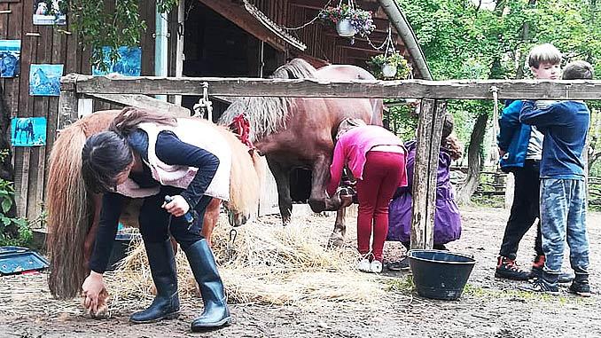 Djeca u aktivnosti timarenja konja