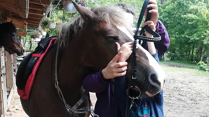 Uzdanje konja