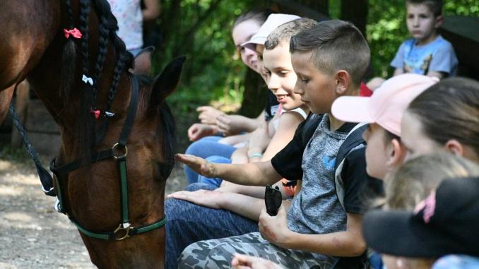 Upoznavanje sa konjem Dinom