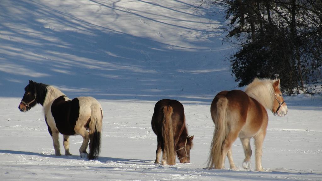 Snijeg i konji