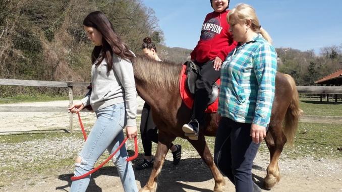 Terapije konjima