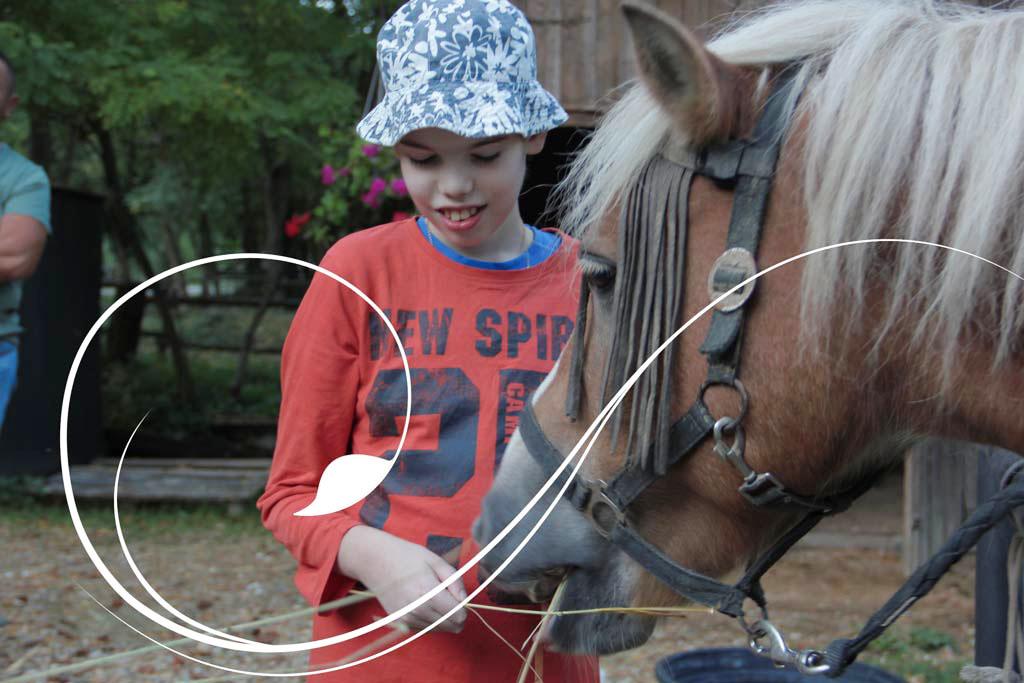 Radionica- Upoznati konja